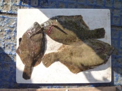 <p>枚方市の安江様、沖の一文字北で、カレイ 37cmまで6匹</p> <p>投げ釣り 餌青イソメ</p>