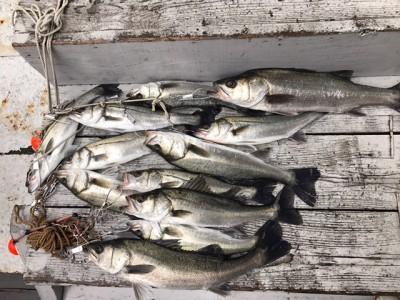 <p>泉州ハネ釣研究会様、旧一文字赤灯・白灯で</p> <p>ハネ60㎝まで12匹</p> <p>エビ撒き釣り</p>