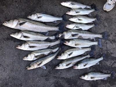 <p>泉州ハネ釣研究会様、旧一文字で</p> <p>45㎝~65㎝までのハネ16匹</p> <p>エビ撒き釣り</p>