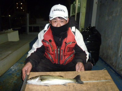 <p>堺市の山本様、中波止2番で、ハネ 43㎝ 1匹</p> <p>ウキ釣り 餌シラサエビ</p>