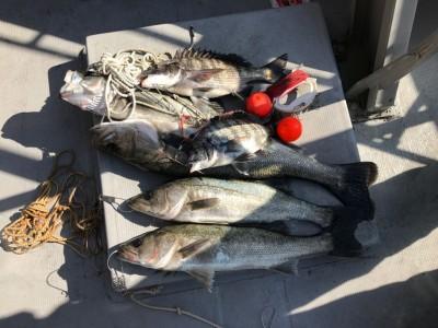 <p>泉州ハネ釣り研究会様、旧一文字赤・沖の北で</p> <p>ハネ68㎝まで4匹・チヌ40cmまで2匹</p> <p>エビ撒き釣り</p>