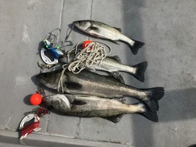 <p>泉州ハネ釣り研究会様、沖一文字北で</p> <p>ハネ60㎝~45㎝まで4匹</p> <p>エビ撒き釣り</p>