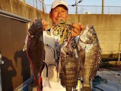 <p>和泉市の松原様、沖の一文字白灯で、チヌ 43cmまで3匹</p> <p>フカセ釣り 餌オキアミ</p>