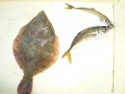 <p>堺市の金森様、沖の一文字白灯で、カレイ 32㎝ 1匹・アジ 22cmまで2匹</p> <p>カレイ(投げ釣り・青イソメ)アジ(サビキ・アミエビ)</p>