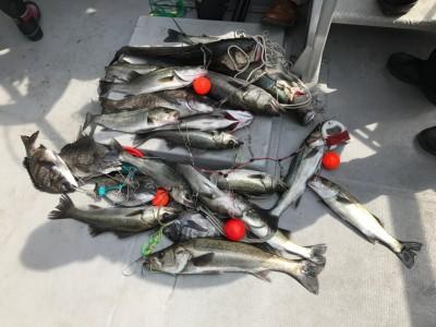 <p>泉州ハネ釣り研究会様、沖北、南、旧赤、中波止</p> <p>ハネ67㎝まで30匹程・チヌ45cmまで5匹</p> <p>エビ撒き釣り</p>