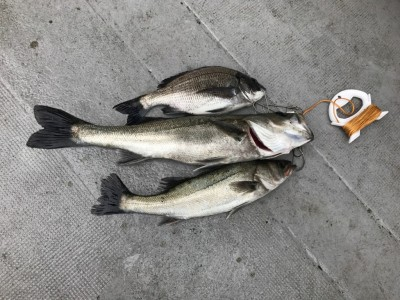 <p>奈良県の左海様、沖一文字北で</p> <p>ハネ55㎝2匹・チヌ32㎝1匹</p> <p>エビ撒き釣り</p>