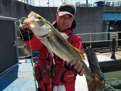<p>堺市の菅ちゃん、沖の一文字北で、ハネ 64cm 1匹</p> <p>ウキ釣り 餌シラサエビ</p>