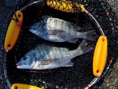 <p>桜井市の梶田様、沖の一文字白灯で、チヌ 38cmまで2匹</p> <p>紀州釣り 餌オキアミ</p>