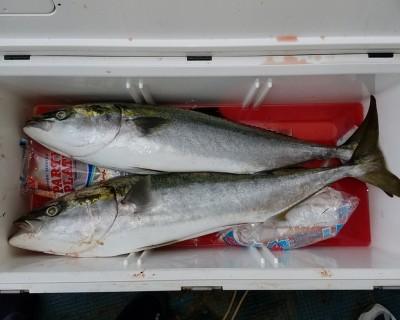 <p>神戸市の西本様、沖一文字北で</p> <p>ブリ96cmまで2匹</p> <p>のませ釣り(アジ)</p>