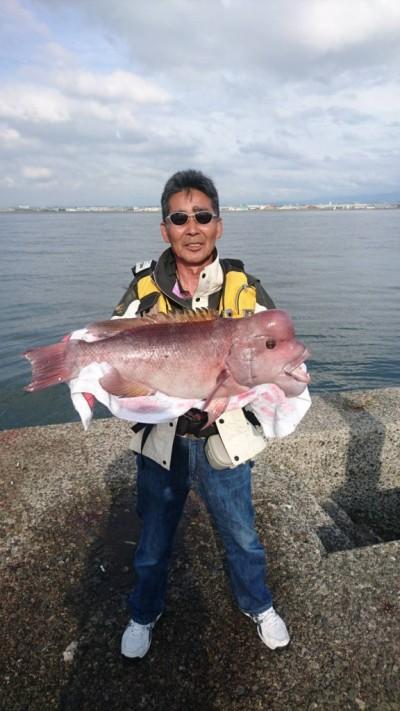 <p>岸和田市の礒田様、沖一文字北で</p> <p>カンダイ71cmまで2匹・チヌ47cmまで5匹</p> <p>落とし込み釣り(イガイ)</p>