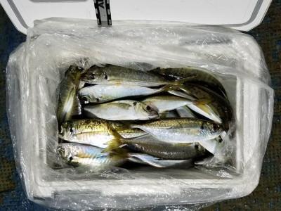 <p>堺市の宝山様、沖の一文字北で、アジ 24cmまで60匹</p> <p>サビキ釣り 餌アミエビ</p>
