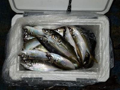 <p>堺市の宝山様、沖の一文字北で、アジ 23cmまで30匹</p> <p>サビキ釣り 餌アミエビ</p>