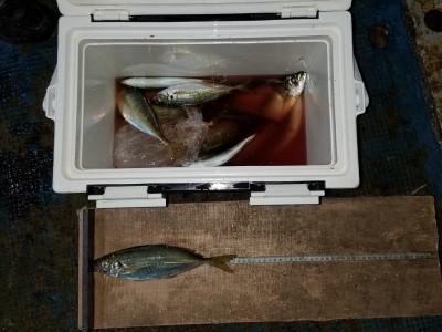<p>堺市の吉住様、沖の一文字北で、アジ 28cmまで15匹</p> <p>サビキ釣り 餌アミエビ</p>