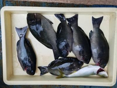 <p>忠岡町の前田様、沖の一文字北で、グレ 30cmまで6匹・ツバス 1匹</p> <p>ウキ釣り 餌石ゴカイ</p>