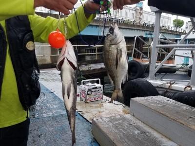 <p>堺市の奥田様、旧の一文字赤灯で、チヌ 41cmまで2匹</p> <p>落とし込み 餌イガイ</p>