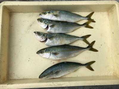 <p>泉佐野の高倉様、沖一文字北で</p> <p>ツバス30cmまで5匹</p> <p>ルアー釣り・のませ釣り</p>