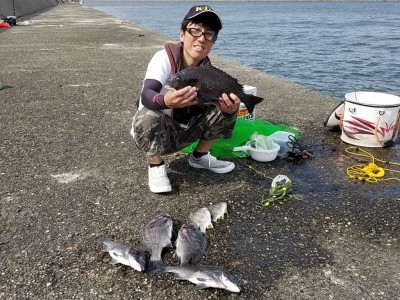 <p>堺市の高野様、旧の一文字赤灯で、チヌ 44cmまで7匹</p> <p>紀州釣り 餌オキアミ</p>