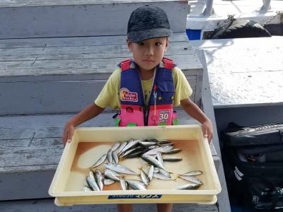 <p>堺市の成子ソウゴくん、沖の一文字北で、豆アジ・小サバ 40匹</p> <p>サビキ釣り 餌アミエビ</p>