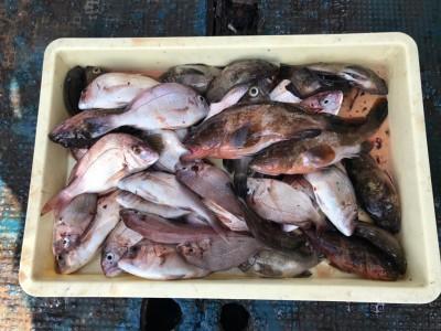 <p>奈良市の川原様、沖一文字北で</p> <p>アコウ・メバル・チャリコ30匹程</p> <p>エビ撒き釣り</p>