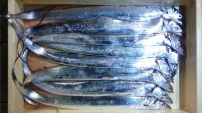 <p>堺市のまーくん、沖の一文字白灯で、太刀魚 指3本まで8匹</p> <p>テンヤ 餌イワシ</p>