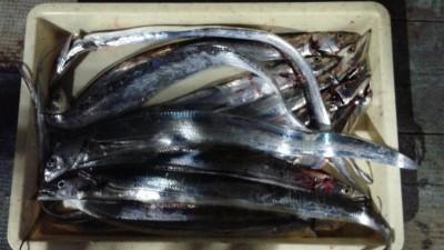 <p>松原市の福井様・高石市の神原様(2人)沖の一文字北で、太刀魚 指4本まで12匹</p> <p>ノーシンカー 餌サンマ</p>
