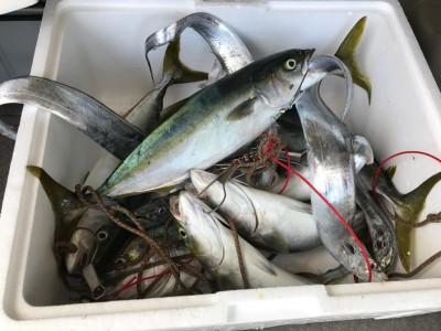 <p>大阪市の広石様、沖一文字北で</p> <p>ツバス45cmまで8匹・太刀魚4匹</p> <p>のませ釣り(活けアジ)</p>
