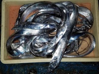 <p>堺市の崎園様、旧の一文字3番で、太刀魚 指3本半まで25匹</p> <p>ウキ釣り 餌キビナゴ</p>