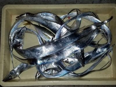 <p>岸和田市の白田様、旧の一文字赤灯で、太刀魚 指3本半まで12匹</p> <p>ウキ釣り 餌サンマ</p>