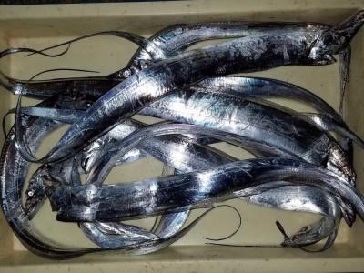 <p>大東市の大川様、沖の一文字白灯で、太刀魚 指4本まで10匹</p> <p>引きずり 餌ドジョウ</p>
