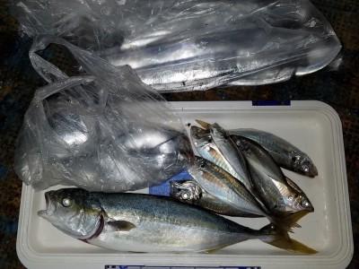 <p>堺市の青木様、沖の一文字白灯で、ハマチ 46.5cm 1匹・太刀魚 指4本まで20匹・アジ 24cmまで7匹</p> <p>ハマチ(ルアー)太刀魚(ルアー)(引きずり・ドジョウ)アジ(サビキ釣り・アミエビ)</p>