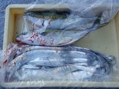 <p>泉佐野市の高倉様、沖の一文字北で、太刀魚 指3本半まで15匹・ツバス 47cmまで2匹</p> <p>タチウオ(引きずり・ドジョウ)ツバス(ルアー・のませ釣り・アジ)</p>