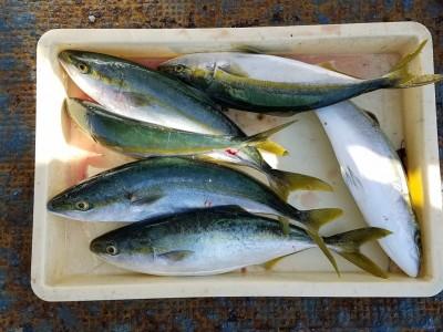 <p>堺市の三宅様、沖の一文字北で、ハマチ 48cmまで6匹</p> <p>のませ釣り 餌アジ</p>