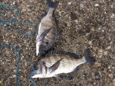 <p>泉佐野市の岡田様、旧の一文字3番で、チヌ 38cmまで2匹</p> <p>フカセ釣り 餌オキアミ・コーン</p>