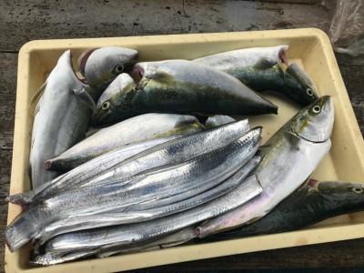 <p>堺市の東田中様、沖一文字北で</p> <p>ハマチ50cmまで7匹・太刀魚9匹・サゴシ40cm</p> <p>ルアー釣り(メタルバイブ)</p>
