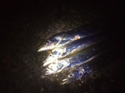 <p>堺市の岡田様、旧の一文字3番で、太刀魚 指3本まで 4匹</p> <p>引きずり 餌サンマ</p>