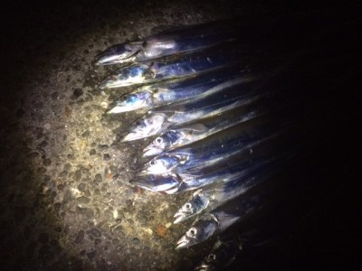 <p>堺市の岡田様、旧の一文字3番で、太刀魚 指3本半まで10匹</p> <p>引きずり 餌サンマ</p>