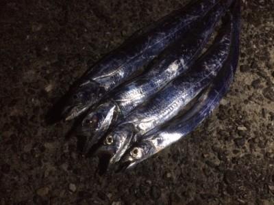 <p>泉佐野市のヒロセマン、旧の一文字3番で、太刀魚 指3本半まで4匹</p> <p>引きずり 餌ドジョウ</p>