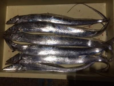 <p>堺市の善ちゃん、沖の一文字北で、太刀魚 指3本まで6匹</p> <p>ウキ釣り 餌キビナゴ</p>
