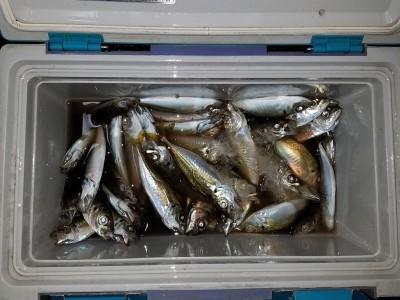 <p>貝塚市の津田様、沖の一文字北で、アジ 18cmまで150匹</p> <p>サビキ 餌アミエビ</p>