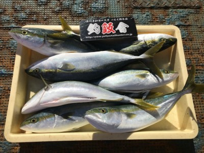 <p>釣魚反會の徳澤様、沖一文字北で</p> <p>ハマチ49cmまで7匹</p> <p>のませ釣り(活けアジ)</p>