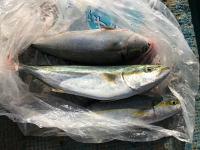 <p>貝塚市の生長様、沖一文字北で</p> <p>ハマチ53cmまで3匹</p> <p>のませ釣り(活けアジ)</p>