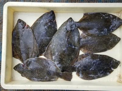 <p>大阪市の竹島様、沖の一文字北で、カレイ 36cmまで7匹</p> <p>投げ釣り 餌青イソメ</p>