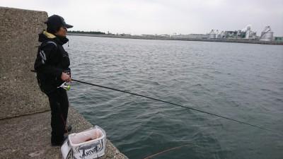 <p>早朝はエビ撒き釣りのお客様3名、アタリなく厳しいようでした。</p> <p>9時からフィッシングマックススタッフ2名、フカセとエビ撒き釣りで赤灯に。</p> <p>13時に様子を見に行くと「ボラは寄ってきたんやけど~」と釣果なし。</p> <p>堺のほうはけっこう釣れてるみたいですし、こっちも釣れそうな感じなんですが&#8230;..。</p> <p>&nbsp;</p>