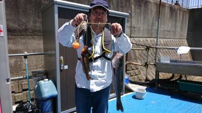 <p>西岡様 旧一文字 エビ撒き釣り ハネ 40.8cm アイナメ</p> <p>釣果写真へのご協力、ありがとうございます!</p> <p>ハネダービーにもエントリー致します。</p>