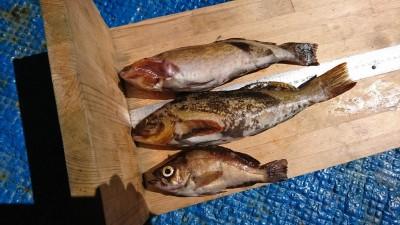 <p>中村様 沖の北 エビ撒き釣り アコウ狙いのはずがグッドサイズなアイナメ(29.0cm)でした。他にメバルも。</p>