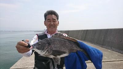 <p>礒田様 沖の北 落とし込み チヌ43cmGET</p> <p>綺麗なチヌGET!おめでとうございます。沖の北もイガイが増えだし良い感じですね!</p>