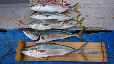 <p>西本様 沖の北 のませ釣り/餌活きアジ ブリ~93cm 5本</p> <p>遂にブリサイズが出ました! 6:00~10:00までで釣られたそうです。イワシとアジを捕食しているみたいです。浅いタナでのアタリが多いみたいですよ!狙われる方は参考にしてください。岸和田渡船では現在、活アジは取り扱いしておりません。フィッシングマックス泉大津店で在庫があるみたいですよ(&#8216;ω&#8217;)餌のお問合せは直接フィッシングマックスまでお願いします。</p>