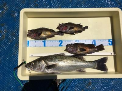<p>田中様 沖の北 エビ撒き釣り ハネ48.5cmを筆頭にメバル3尾もGET!</p> <p>水潮が心配でしたが、根魚も喰いだしてきていますね</p> <p>おめでとうございます!!</p> <p>&nbsp;</p>
