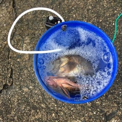 <p>沖の北 7:00最新釣果 メバル・ガシラ</p> <p>サビキ仕掛けにオキアミを付け、底狙いで釣られてましたよ♪</p>
