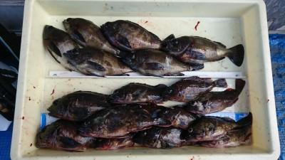 <p>河南町の中村様 沖の北 エビ撒き釣り ガシラ最大24cm メバルも20cmの良型多数 秘密のマイポイントで♪</p>